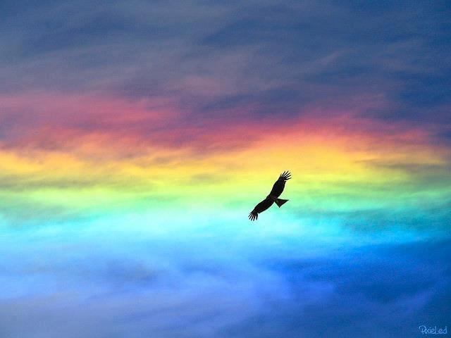 大空に舞う鷲