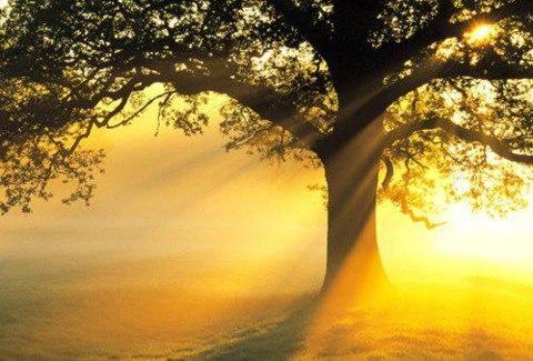 光は分け隔てをすることなく、すべての人を包みます