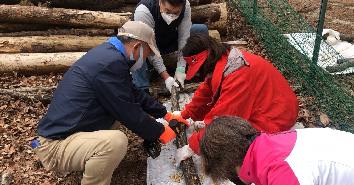 シイタケ菌を植える作業