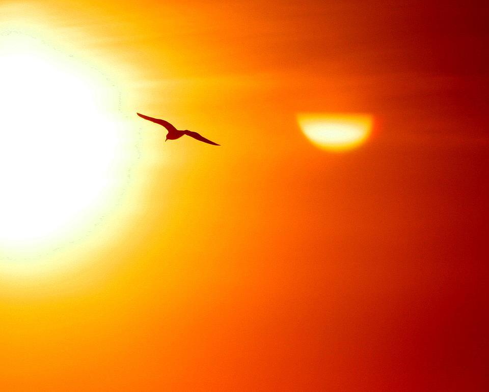 大空に舞う鳥